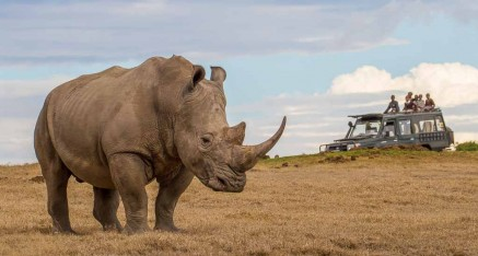 Rhino Awareness - Kenya