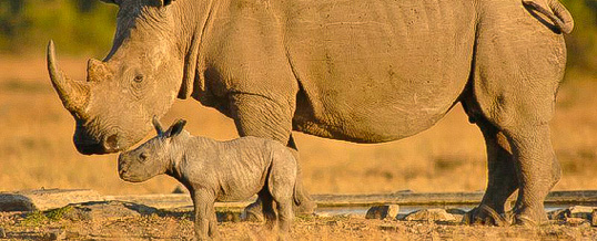 Rhino Awareness & Protection Safaris