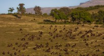 Wildlife-Observations-Worldwide-Ethiopia-Djelada many (1 von 1)
